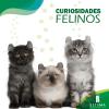 Curiosidades-Felinos